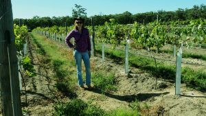 Therese in new Tempranillo block