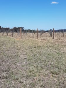 All the posts in, almost ready for vines